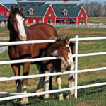 Warm Springs Ranch, Home of the Budweiser Clydesdales in Boonville, Missouri