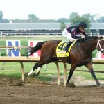 Art Collector Horse Ellis Park Derby Wins